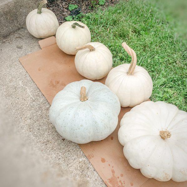 protect  pumpkins